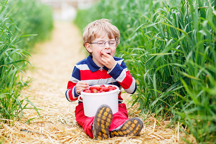 little boy eating strawberries